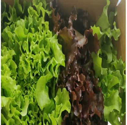 Assorted Lettuce Box